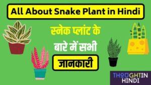 All About Snake Plant in Hindi स्नेक प्लांट के बारे में सभी जानकारी