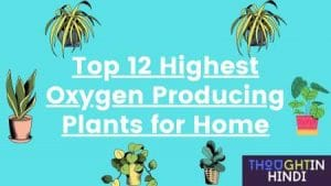 Top 12 Highest Oxygen Producing Plants for Home | Hindi