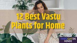 12 Best Vastu Plants for Home | सुखमय जीवन के लिए लगाए ये शुभ वास्तु पौधे